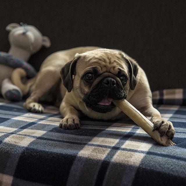 吠えにくい犬種とその特徴