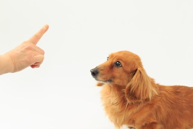 子犬にしつけをしている様子
